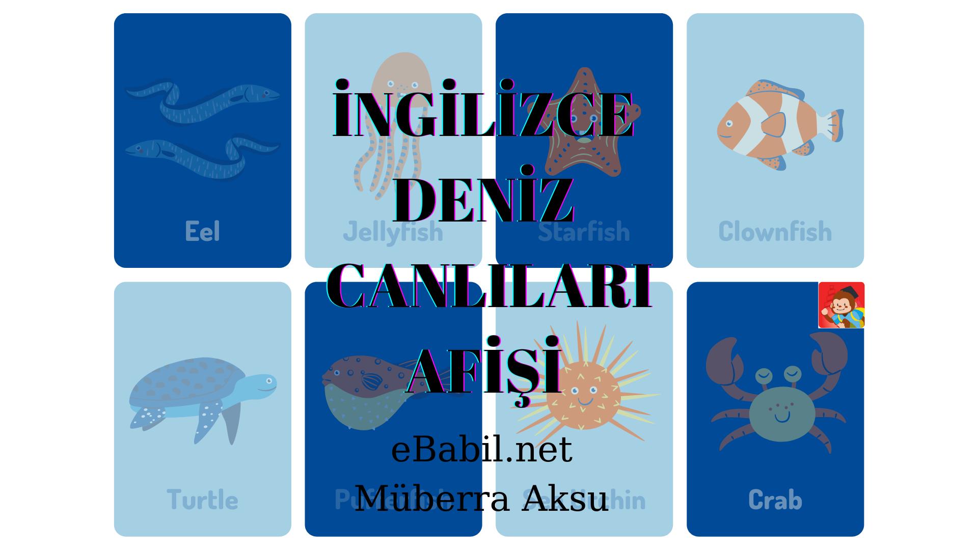İngilizce Kavram Haritası: Deniz Canlıları (Sea Animals)